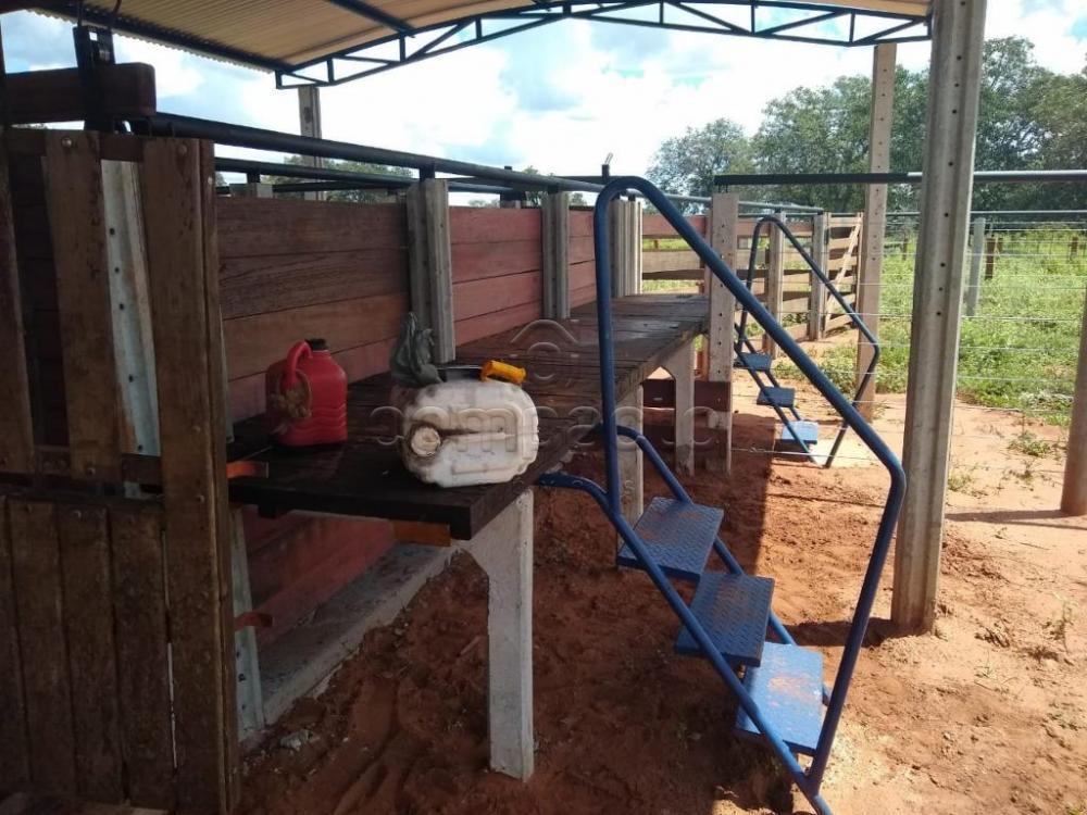 Comprar Rural / Fazenda em Cassilândia apenas R$ 7.500.000,00 - Foto 10