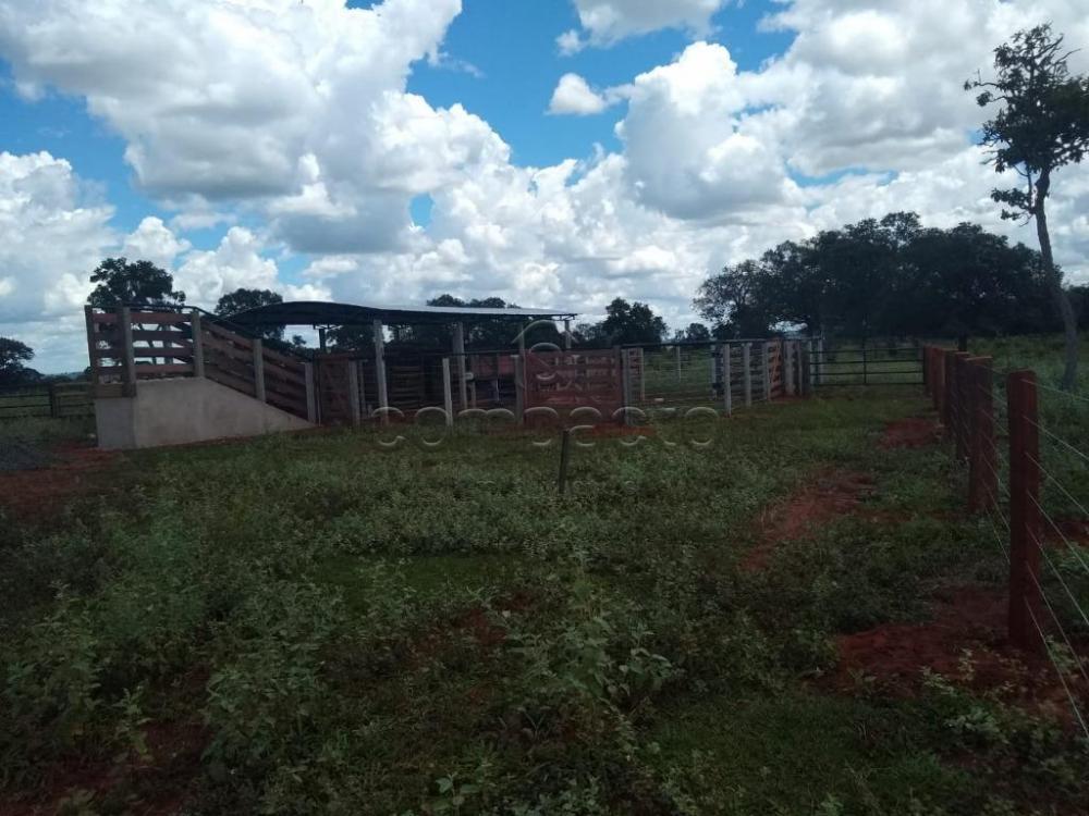 Comprar Rural / Fazenda em Cassilândia apenas R$ 7.500.000,00 - Foto 12