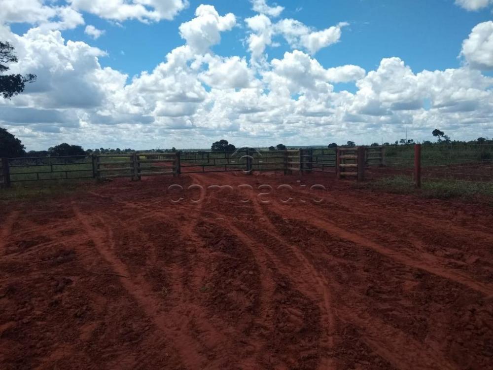 Comprar Rural / Fazenda em Cassilândia apenas R$ 7.500.000,00 - Foto 13