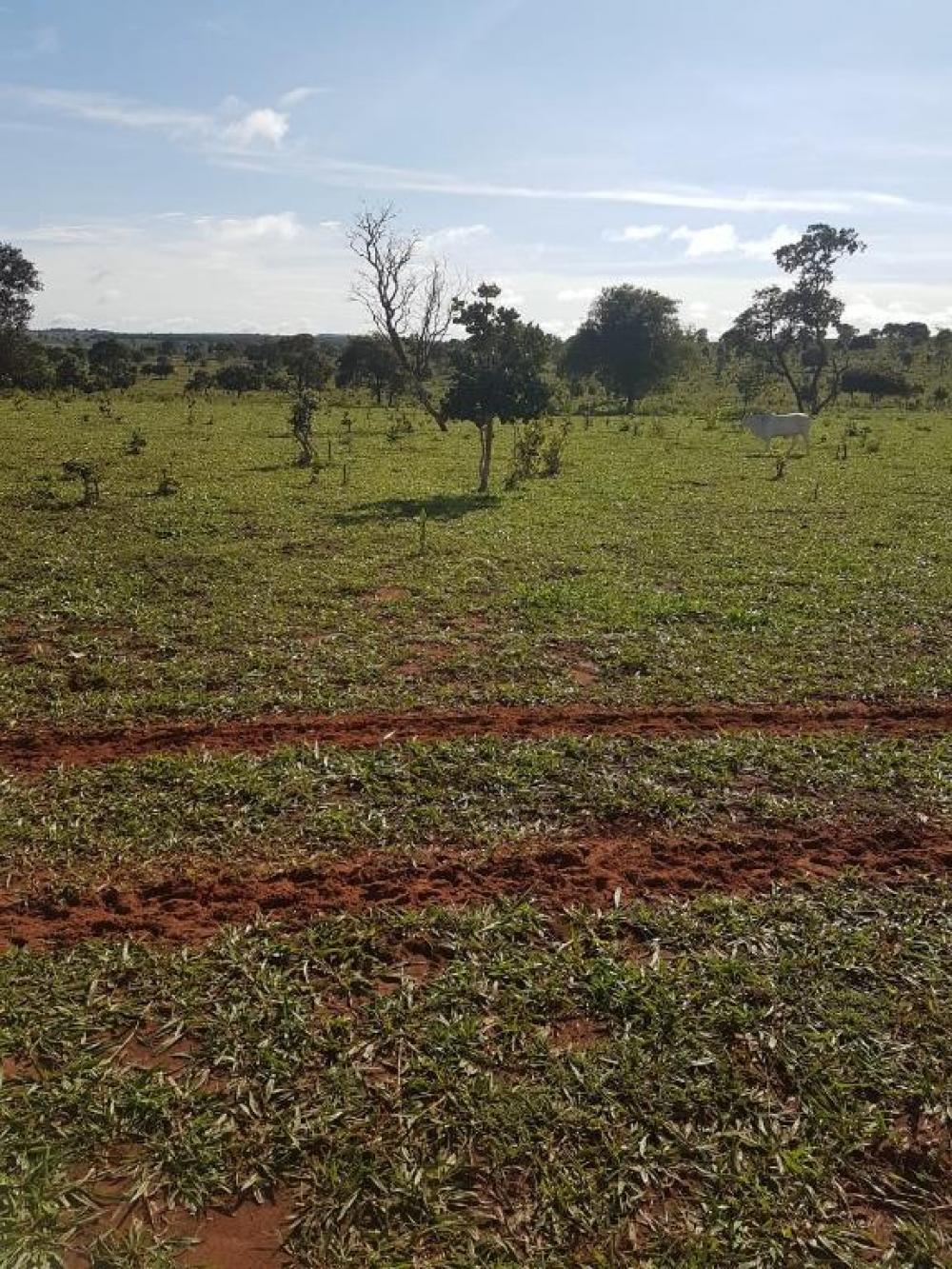 Comprar Rural / Fazenda em Cassilândia apenas R$ 7.500.000,00 - Foto 16