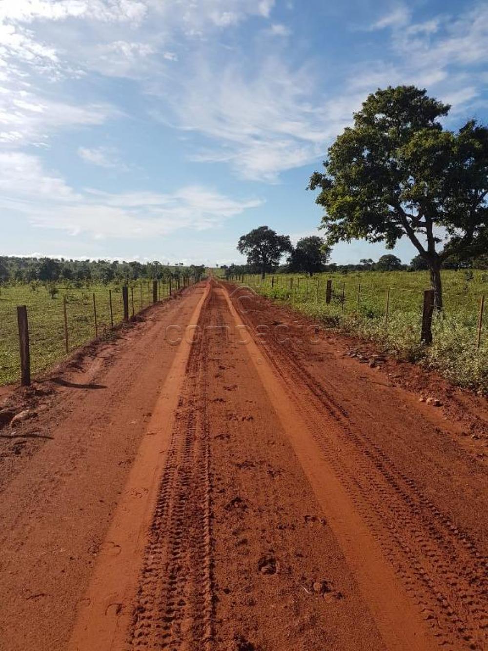 Comprar Rural / Fazenda em Cassilândia apenas R$ 7.500.000,00 - Foto 17