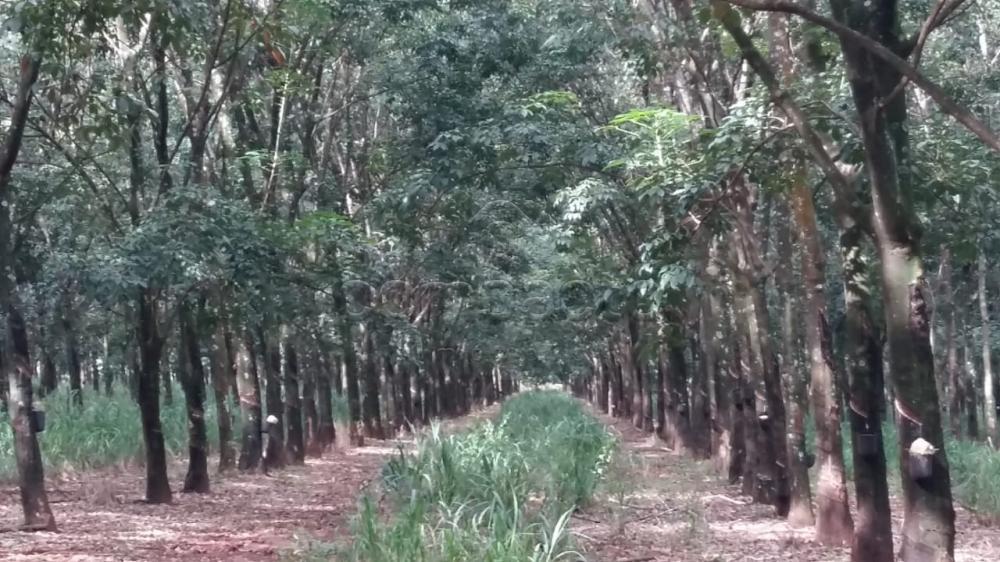 Comprar Terreno / Área em Frutal apenas R$ 3.600.000,00 - Foto 1
