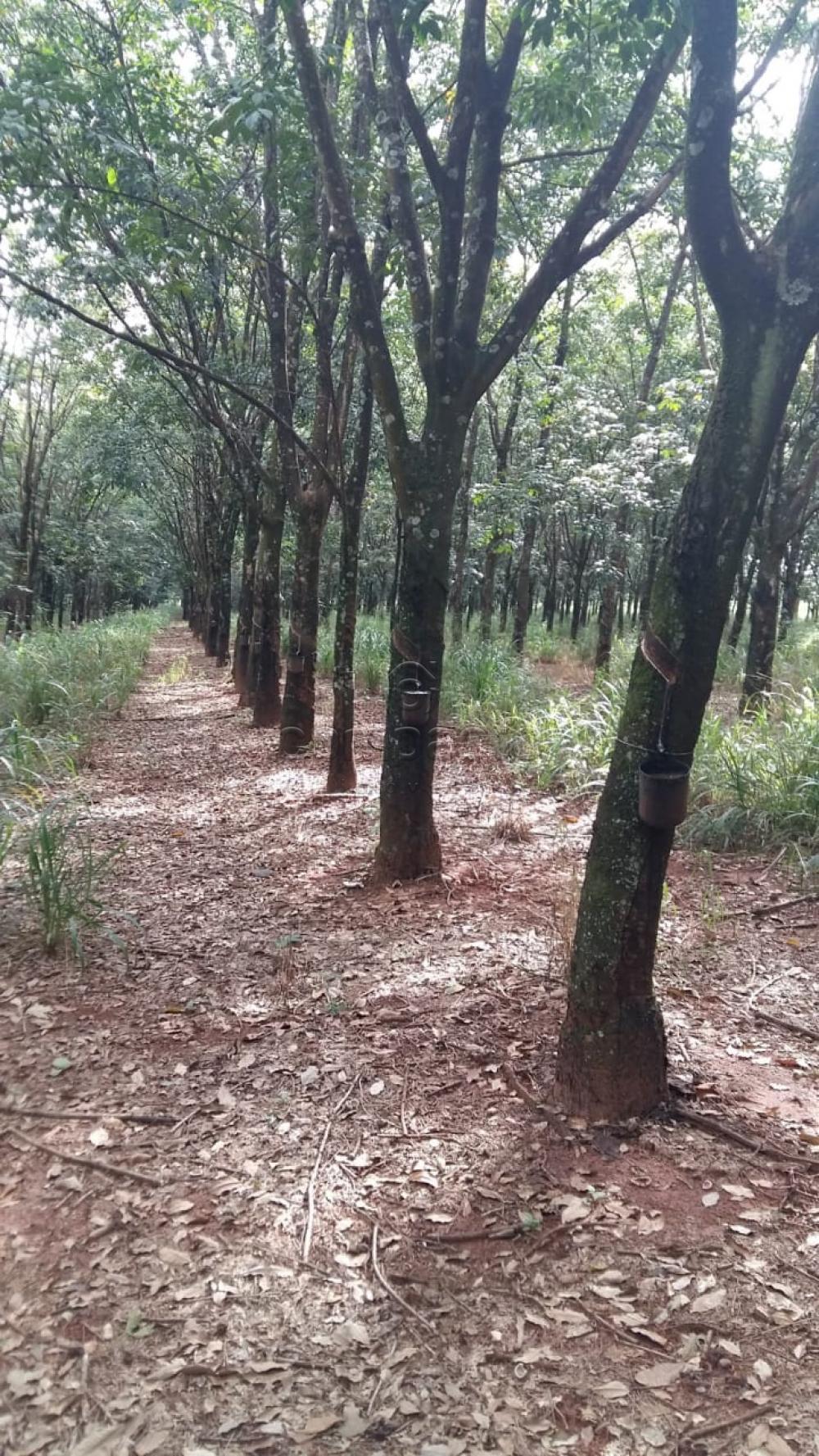 Comprar Terreno / Área em Frutal apenas R$ 3.600.000,00 - Foto 3