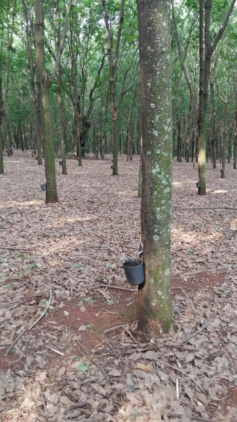 Comprar Terreno / Área em Frutal apenas R$ 3.600.000,00 - Foto 4