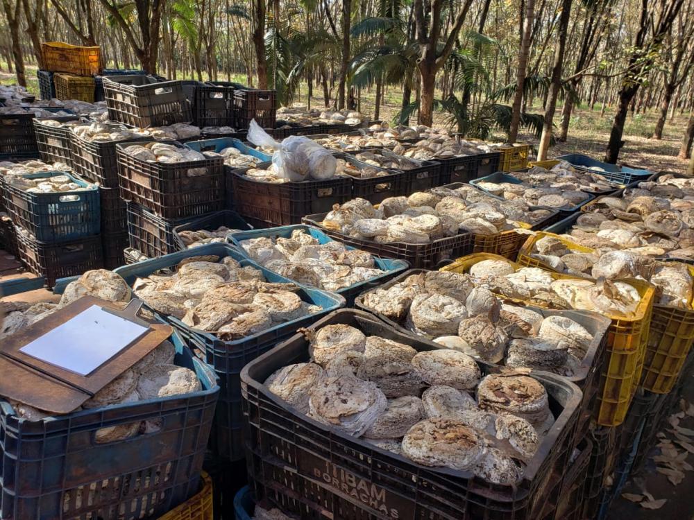 Comprar Terreno / Área em Frutal apenas R$ 3.600.000,00 - Foto 9