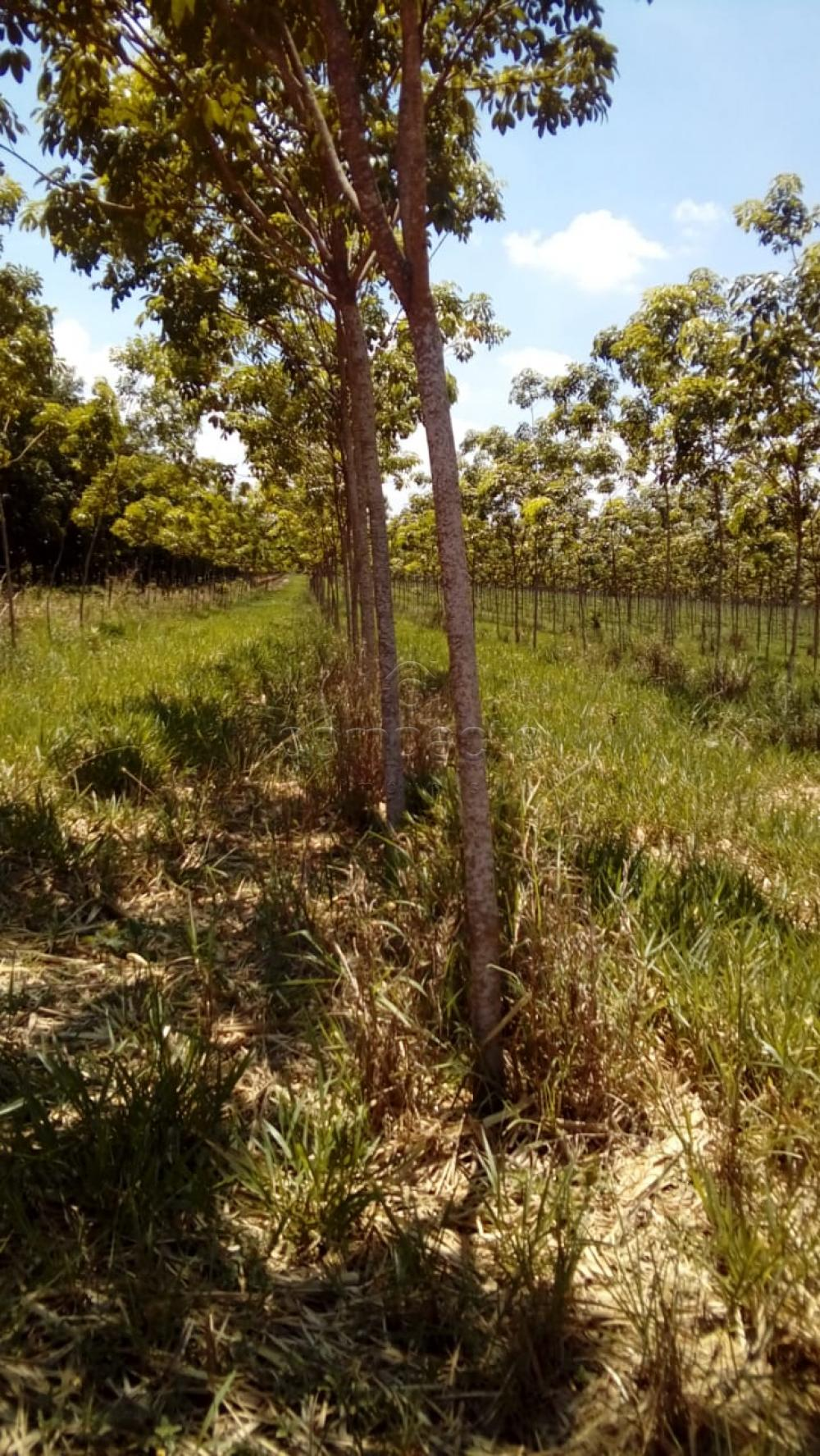 Comprar Terreno / Área em Frutal apenas R$ 3.600.000,00 - Foto 11