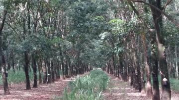 Terreno / Área em Frutal , Comprar por R$3.600.000,00